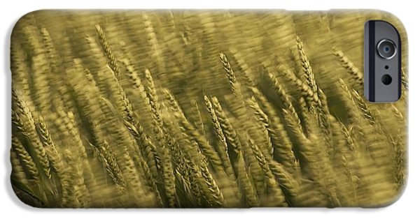 Agriculture iPhone Cases - Windblown Wheat iPhone Case by Meirion Matthias