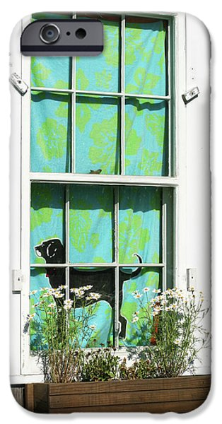 Black Dog iPhone Cases - Window on Marthas Vineyard Island Massachusetts iPhone Case by Michelle Wiarda
