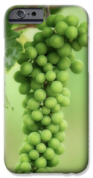 Wine Before Picture iPhone Case by Lisa Knechtel