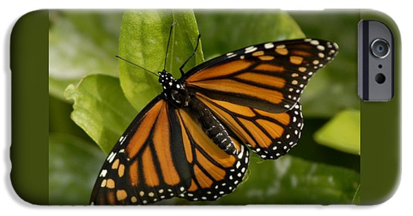 Bugs Pyrography iPhone Cases - Winged Beauty iPhone Case by Donna Stiffler