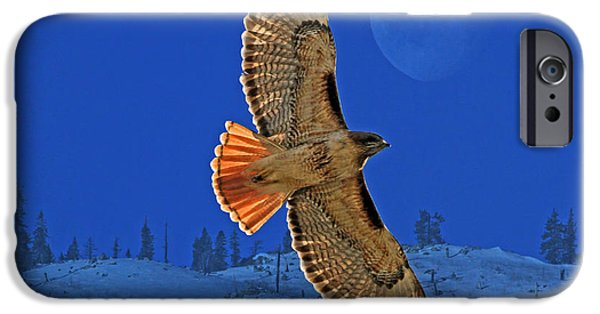 Hawk iPhone Cases - Wings iPhone Case by Donna Kennedy