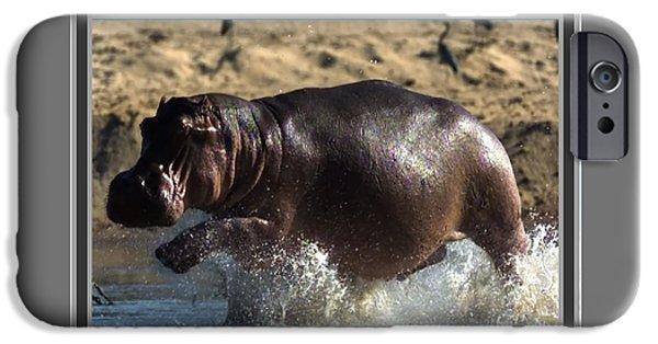 Abstract Digital Mixed Media iPhone Cases - Winner of the herd harem Hippopotamus iPhone Case by Navin Joshi