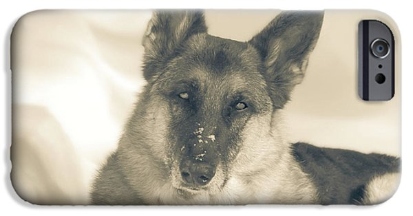 Dog In Landscape iPhone Cases - Winter Beauty iPhone Case by Michele Thielke