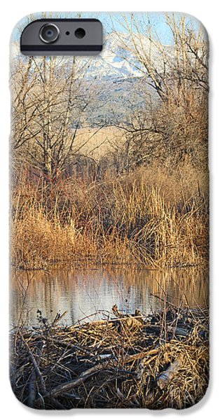 West Fork iPhone Cases - Winter Beaver Dam Charm CO     iPhone Case by Dale Jackson