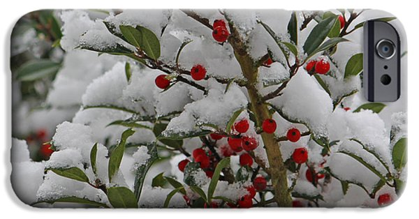 Berry Digital iPhone Cases - Winter Berries in watercolor iPhone Case by Suzanne Gaff