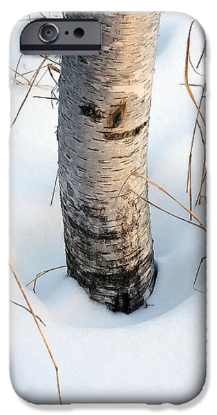 Snowy iPhone Cases - Winter Birch iPhone Case by Bill Morgenstern