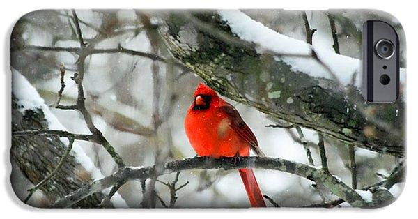 Winter Scene iPhone Cases - Winter Bird iPhone Case by Larry Bishop