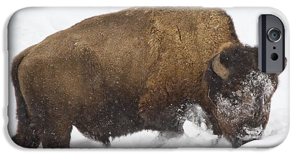 Bison Pyrography iPhone Cases - Winter Buffalo iPhone Case by Cat Hesselbacher