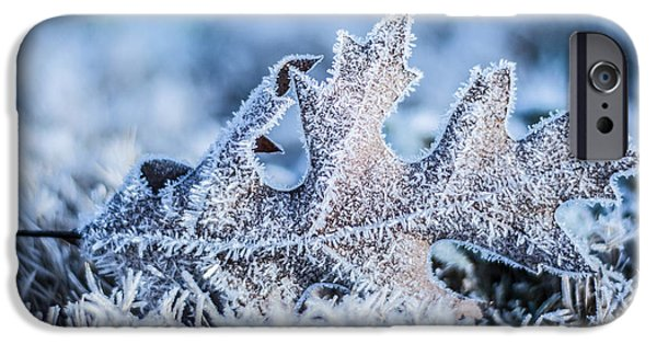 Wintertime iPhone Cases - Winter Frost iPhone Case by Parker Cunningham