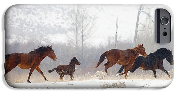 Wild Horses iPhone Cases - Winter Gallop iPhone Case by Mike  Dawson