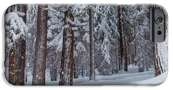 Winter Storm iPhone Cases - Winter In The Forest iPhone Case by Jonathan Nguyen