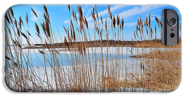 Salt Marsh. New England iPhone Cases - Winter in the Salt Marsh iPhone Case by Catherine Reusch  Daley