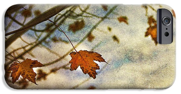 Leaves iPhone Cases - Winter On The Way iPhone Case by Rebecca Cozart