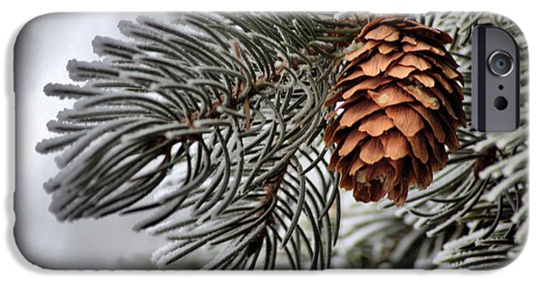 Pines Pyrography iPhone Cases - Winter Pine iPhone Case by Nena Trapp