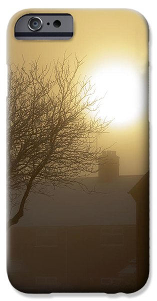 Wolf Picture Art iPhone Cases - Winter Sun iPhone Case by Svetlana Sewell