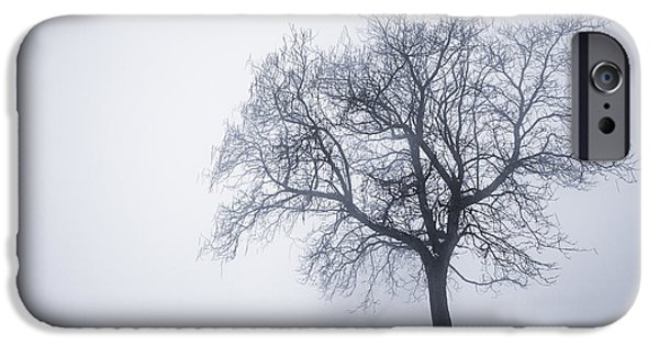 Snowy iPhone Cases - Winter tree and bench in fog iPhone Case by Elena Elisseeva