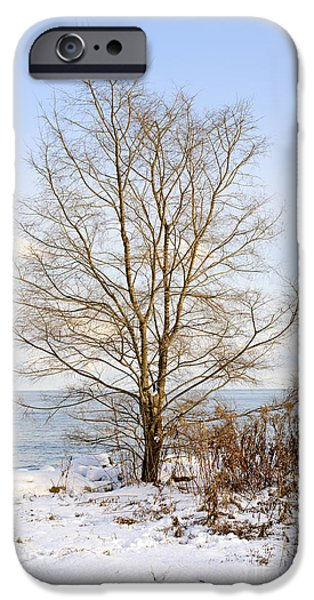 Snowy iPhone Cases - Winter tree on shore iPhone Case by Elena Elisseeva
