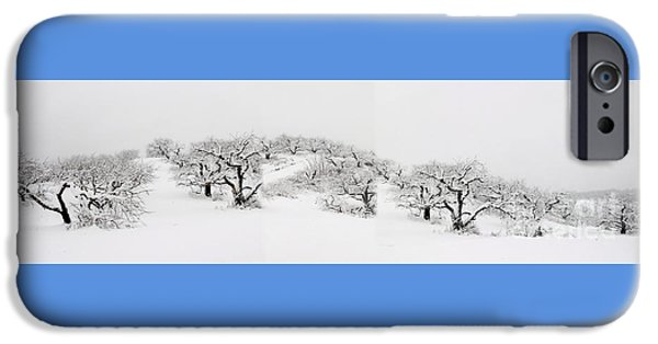 Wintertime iPhone Cases - Wintertime At The Orchard iPhone Case by Marcel  J Goetz  Sr