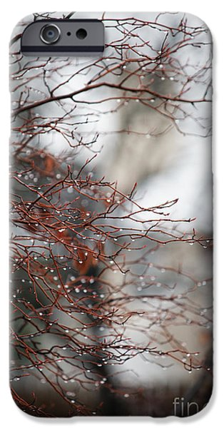 Torn iPhone Cases - Wintry Mix iPhone Case by Linda Knorr Shafer