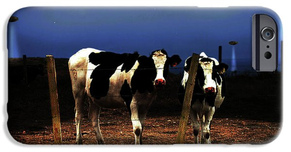 Cow Humorous iPhone Cases - Witness . The Arrival iPhone Case by Wingsdomain Art and Photography
