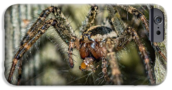 Wolf Photo iPhone Cases - Wolf Spider Lunch iPhone Case by Steve Harrington