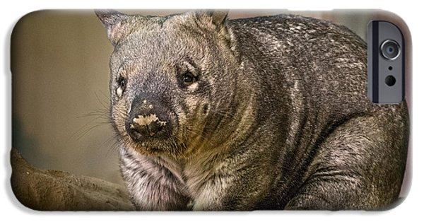 Strange iPhone Cases - Mr. Wombat iPhone Case by Jamie Pham