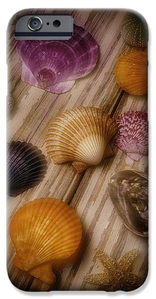 Marine iPhone Cases - Wonderful Shell Still Life iPhone Case by Garry Gay