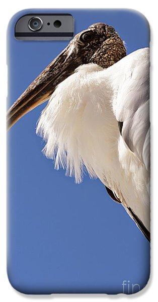 Stork iPhone Cases - Wonderful Wood Stork iPhone Case by Carol Groenen