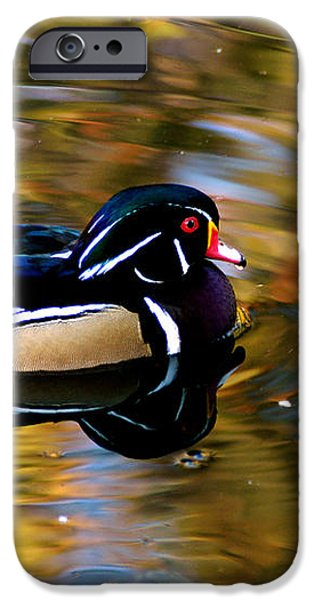 Wood Duck iPhone Case by Clayton Bruster