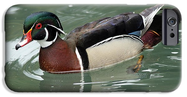 D.c. iPhone Cases - Wood Duck Drake iPhone Case by Eric Roach