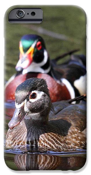 Beaver Lake iPhone Cases - Wood Ducks at Beaver lake Stanley park Vancouver Canada iPhone Case by Pierre Leclerc Photography