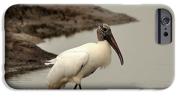Stork iPhone Cases - Wood Stork Walking iPhone Case by Al Powell Photography USA