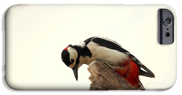Animal Picture iPhone Cases - Woodpecker In Spring iPhone Case by Heike Hultsch