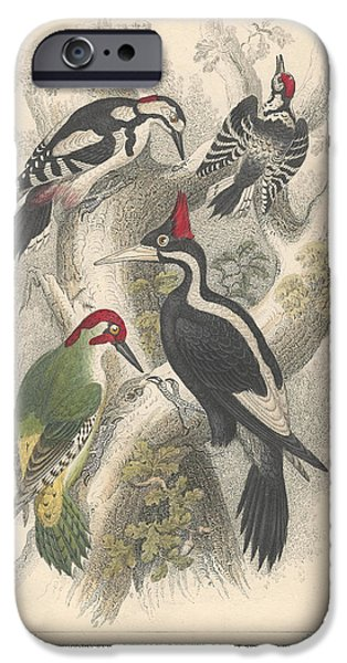 Woodpecker iPhone Cases - Woodpeckers iPhone Case by Oliver Goldsmith