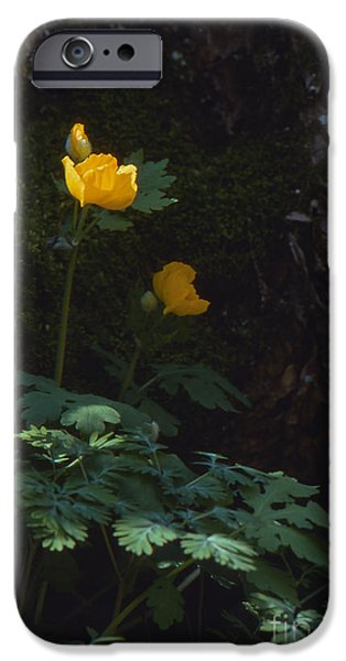Southern Indiana iPhone Cases - Woods Popply iPhone Case by Lowell Anderson