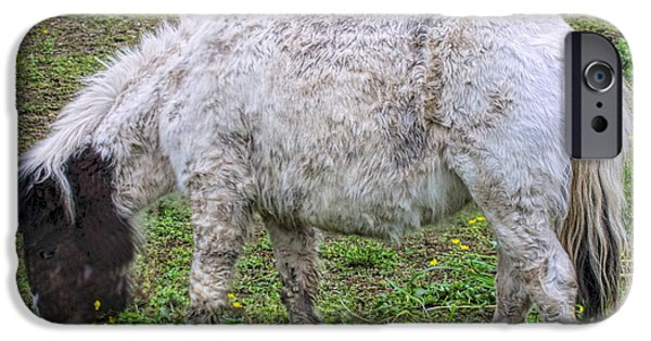 Gray Hair iPhone Cases - Wooly Miniature Horse iPhone Case by Linda Phelps