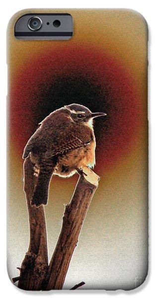 Wren at Sundown iPhone Case by Sue Melvin