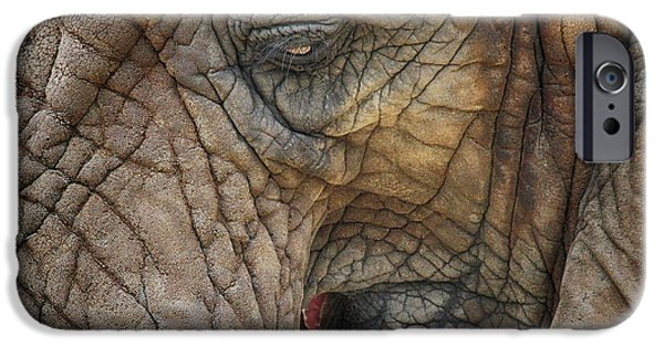 Elephants iPhone Cases - Wrinkles iPhone Case by Emma England