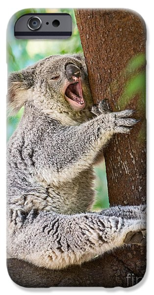 Koala iPhone Cases - Yawn and Stretch iPhone Case by Jamie Pham