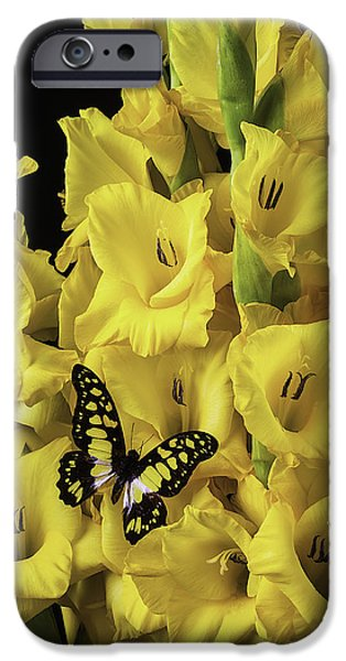 Gladioli iPhone Cases - Yellow And Black Butterfly On Yellow Glads iPhone Case by Garry Gay