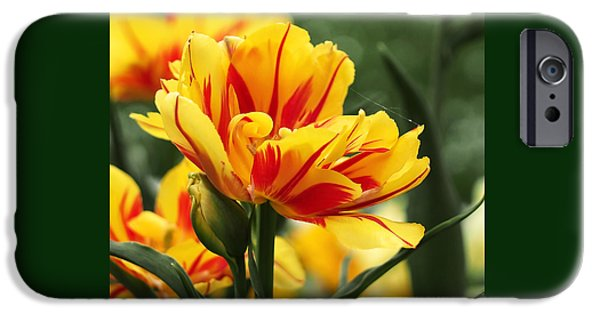 Botanical iPhone Cases - Yellow and Red Triumph Tulips iPhone Case by Rona Black