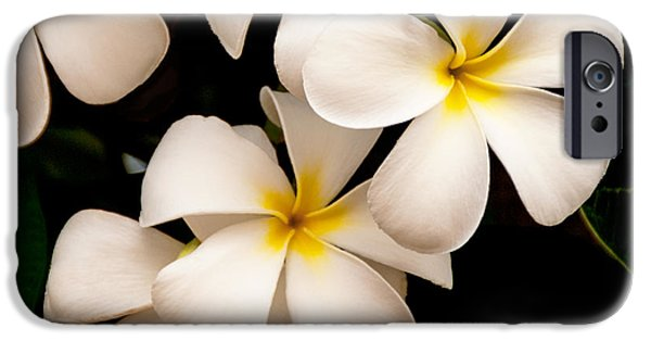 Big Island iPhone Cases - Yellow and White Plumeria iPhone Case by Brian Harig