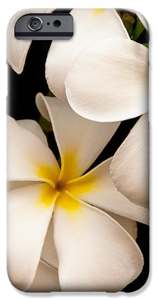 Yellow and White Plumeria iPhone Case by Brian Harig