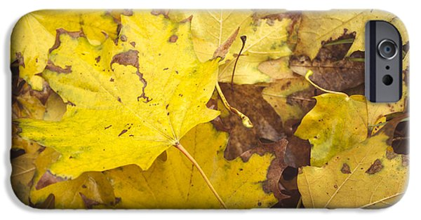 Fallen Leaves iPhone Cases - Yellow autumn leaves iPhone Case by Thubakabra