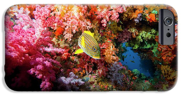 Undersea Photography iPhone Cases - Yellow Banded Sweetlip Fish And Coral iPhone Case by Beverly Factor