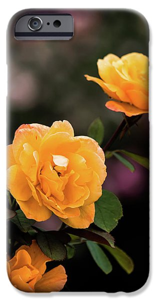 Young iPhone Cases - Yellow Bursts of Sunshine iPhone Case by Shelby  Young