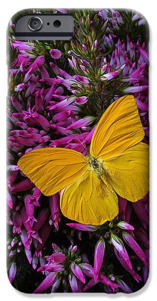Insects Photographs iPhone Cases - Yellow Butterfly On Italian Ventricosa iPhone Case by Garry Gay