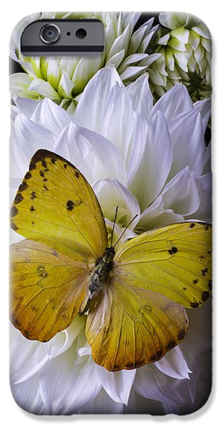 Insects Photographs iPhone Cases - Yellow Butterfly On White Dahlia iPhone Case by Garry Gay