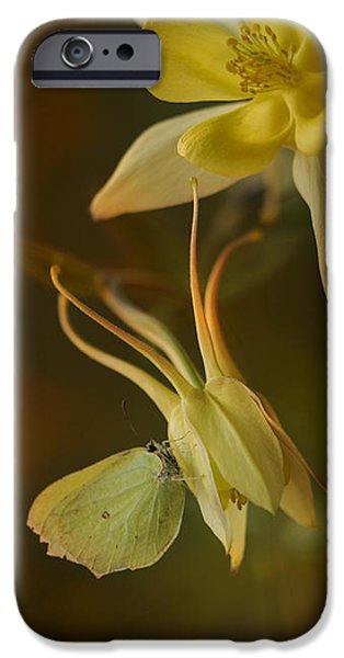 Snake iPhone Cases - Yellow butterfly sitting on a yellow flower iPhone Case by Jaroslaw Blaminsky