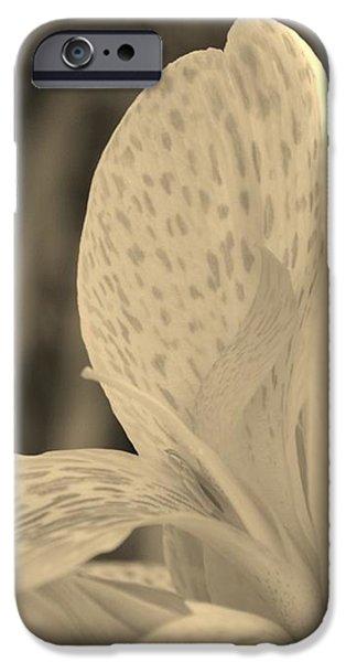 Yellow Canna iPhone Case by Melanie Moraga
